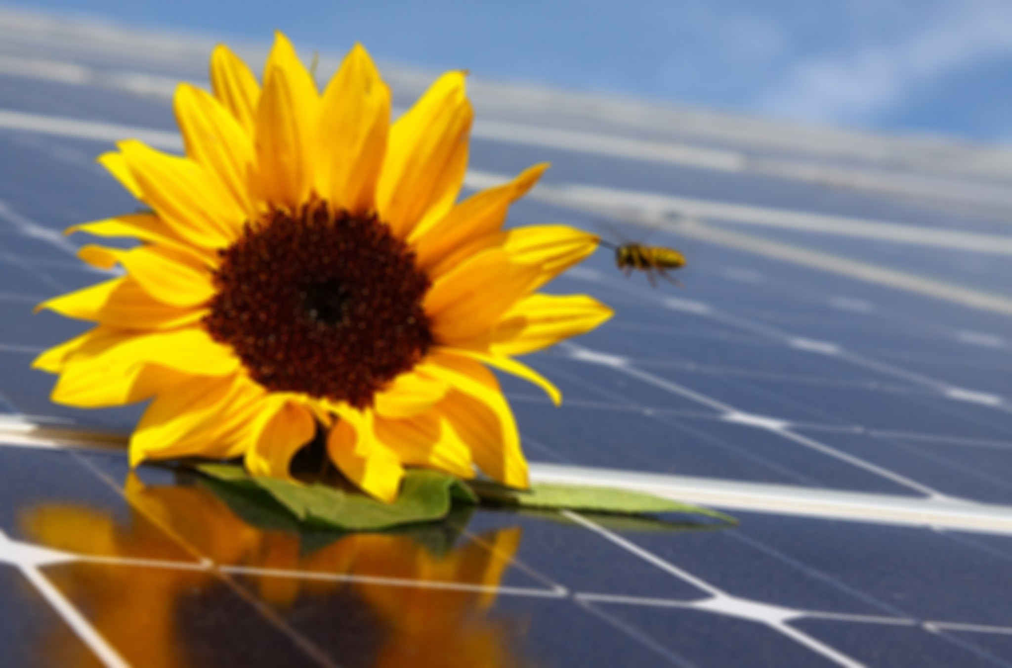 martenspesel_photovoltaik